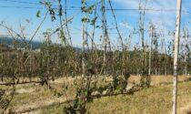 Grandine: tanti i danni alle colture