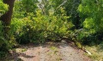 Bosco della Partecipanza: i sentieri ripristinati