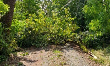 Bosco della Partecipanza conta i danni dopo il maltempo