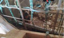 Il lager dei cani: denunciato il proprietario per maltrattamenti