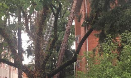 Temporale Vercelli: diversi interventi per alberi pericolanti