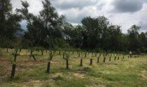Riqualificazione fluviale: due interventi nel Vercellese