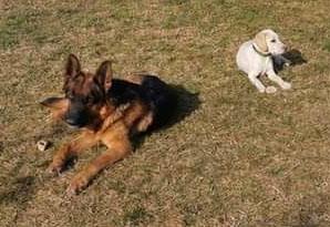 """Rex e Argo mancano da casa da 10 giorni: """"Aiutateci a trovarli"""""""