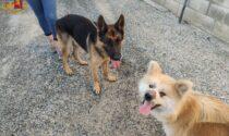 Bianzè: due cani in pericolo sui binari salvati dalla Polizia