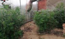 Quattro denunce per detenzione e coltivazione di stupefacenti