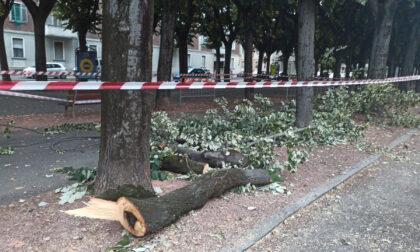 Crolla un ramo in viale Rimembranza: il terzo in tre giorni