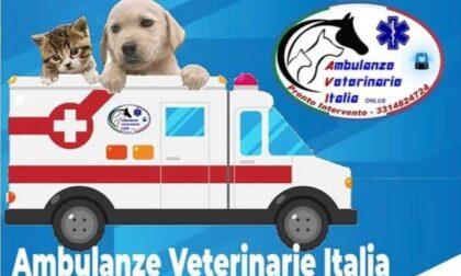 In arrivo un servizio di ambulanza veterinaria